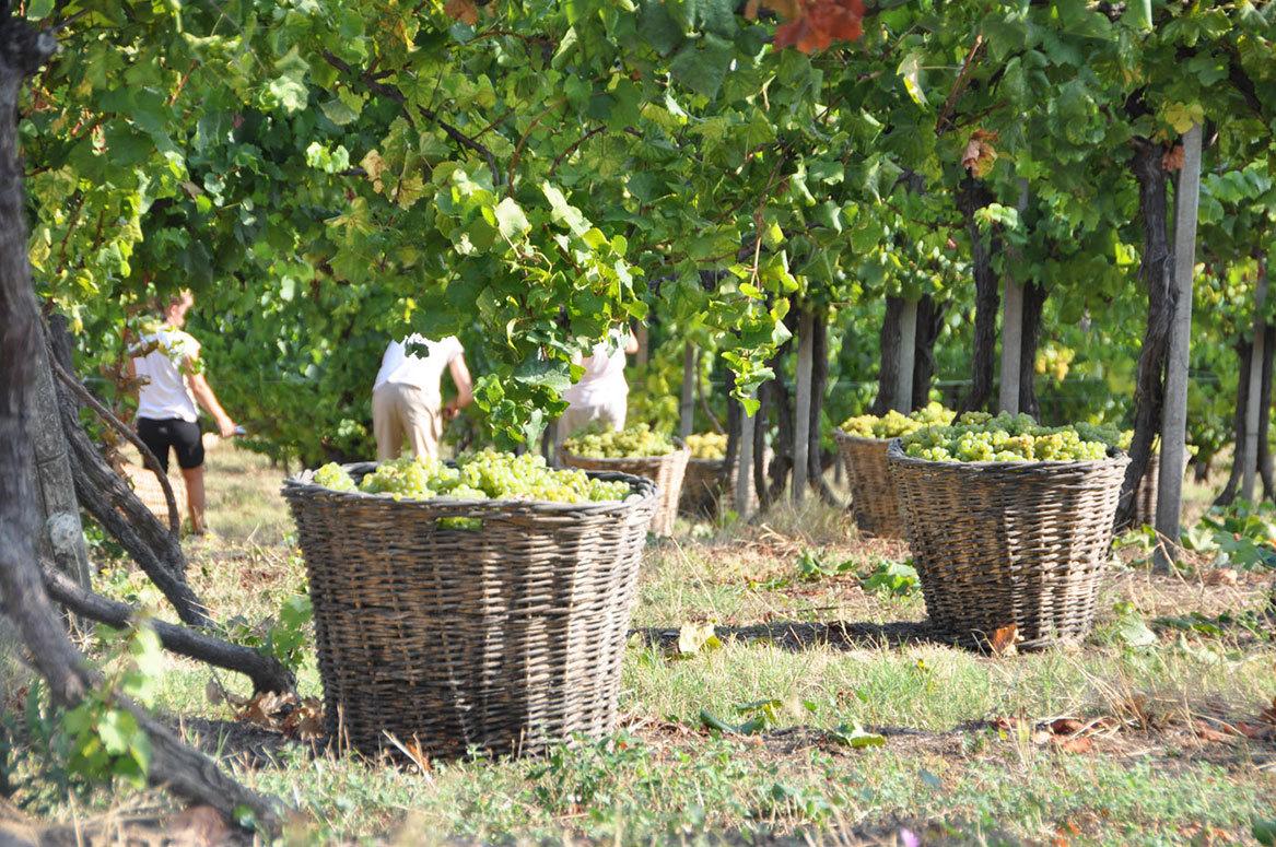 Фестиваль вина в Нейве d9028d0c933515748fc5235f2e9d4777.jpg