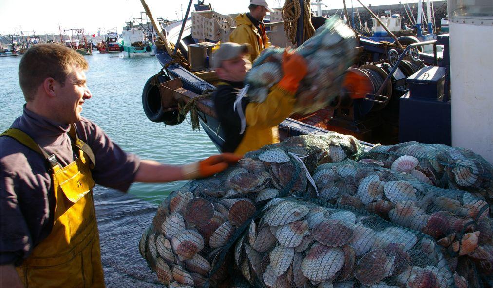 Фестиваль морских гребешков в Вилер-Сюр-Мер e89eb16ba9f84542f12600b24c6507e0.jpg