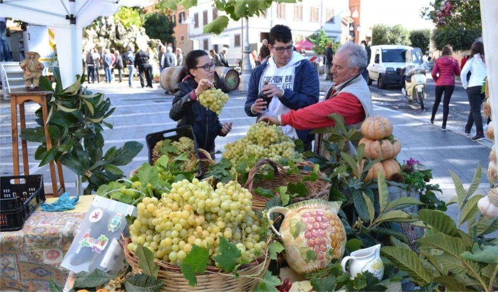 Праздник вина Sagra dell'Uva в Марино e9c63651675b8568956e706c8f6bb3a6.jpg