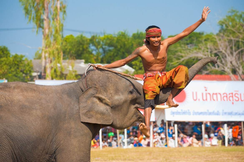 Фестиваль слонов в Сурине ea2f44e81c3400eabf59347010c53cd4.jpg
