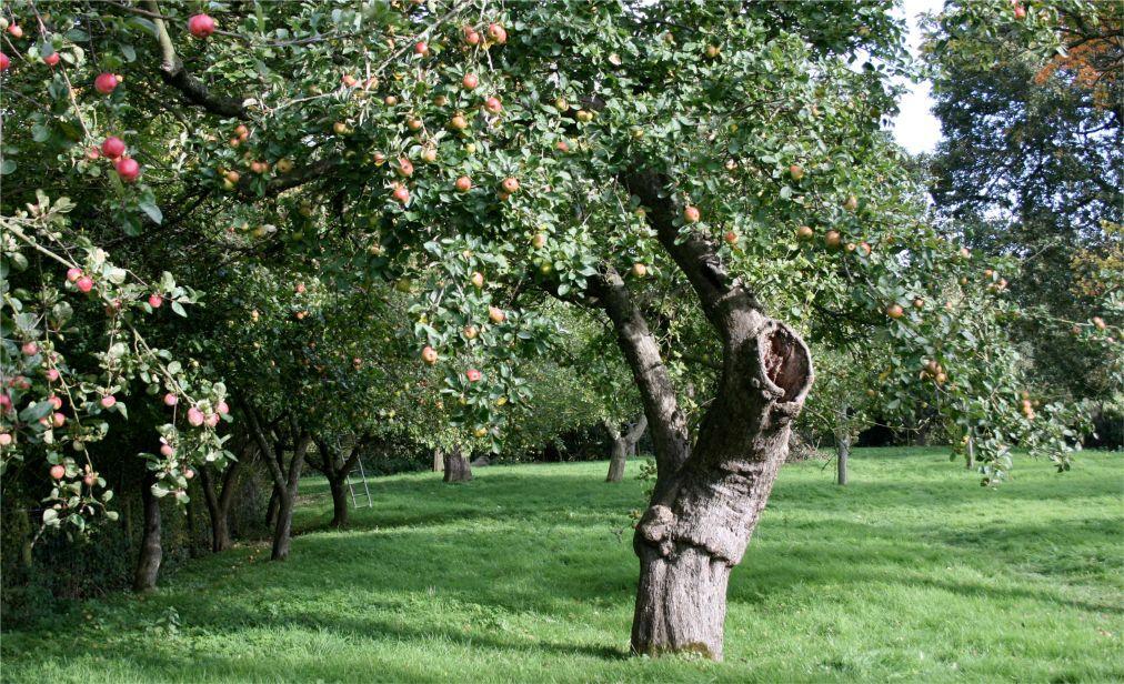 Фестиваль яблок и сидра Big Apple в Херефордшире f1970dc8de3d3740f809a14da82d560c.jpg