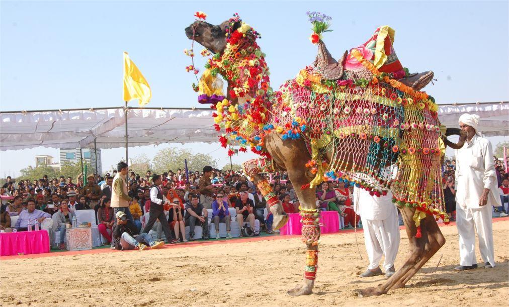 Биканерский фестиваль верблюдов f1f4ac81d429270042a12aec0a35eebf.jpg