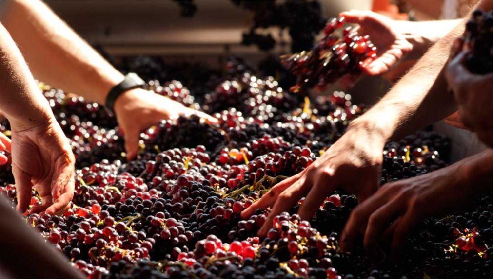 Фестиваль вина в Лимассоле f29343d70fb2fe038c3feb996cae44b7.jpg