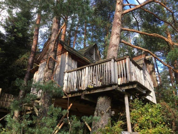 отель из домиков на ветвях Nids de Vosges