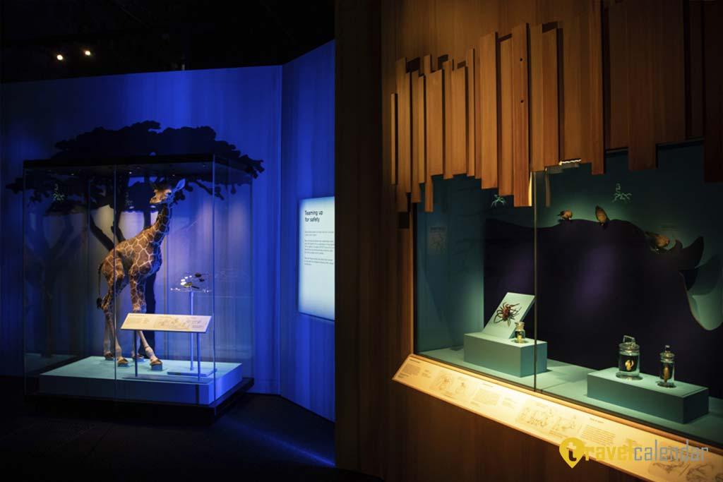 Вселенная фантастических тварей представлена в Музей естествознания в Лондоне
