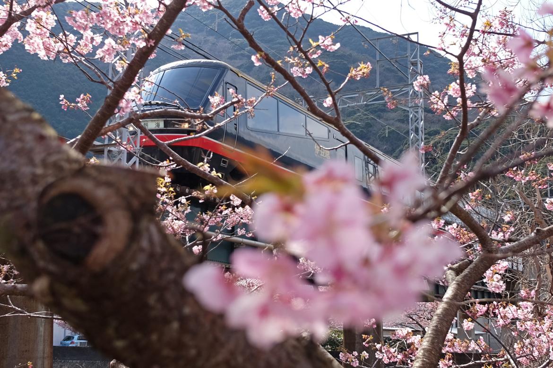 Фестиваль цветения сакуры в Токио 047390b8d2a3bf7e2fb5ad03fb9cb094.jpg