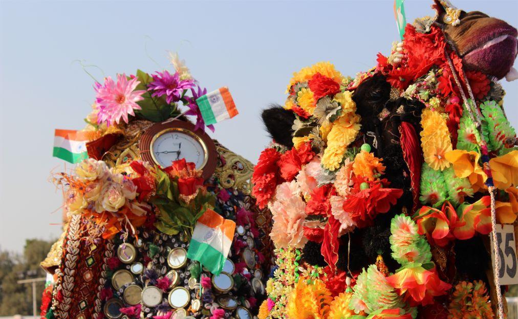 Биканерский фестиваль верблюдов 048651285daf3c88415ec1c1e1371609.jpg
