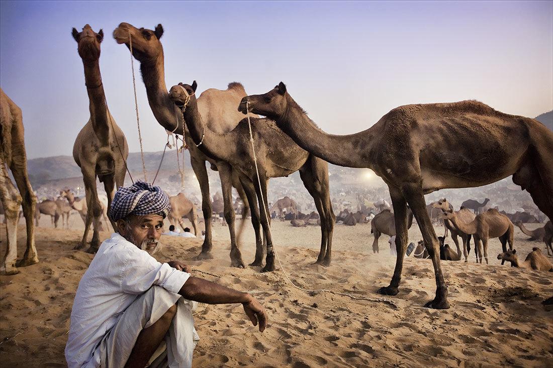 Ярмарка верблюдов в Пушкаре 07fd16c6dadd4dbc0fa31ee63956888b.jpg