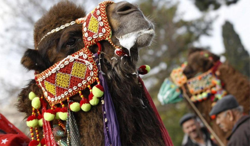 Верблюжьи бои в Сельчуке 082d2efe683da150f38ecabe1bcbdf29.jpg
