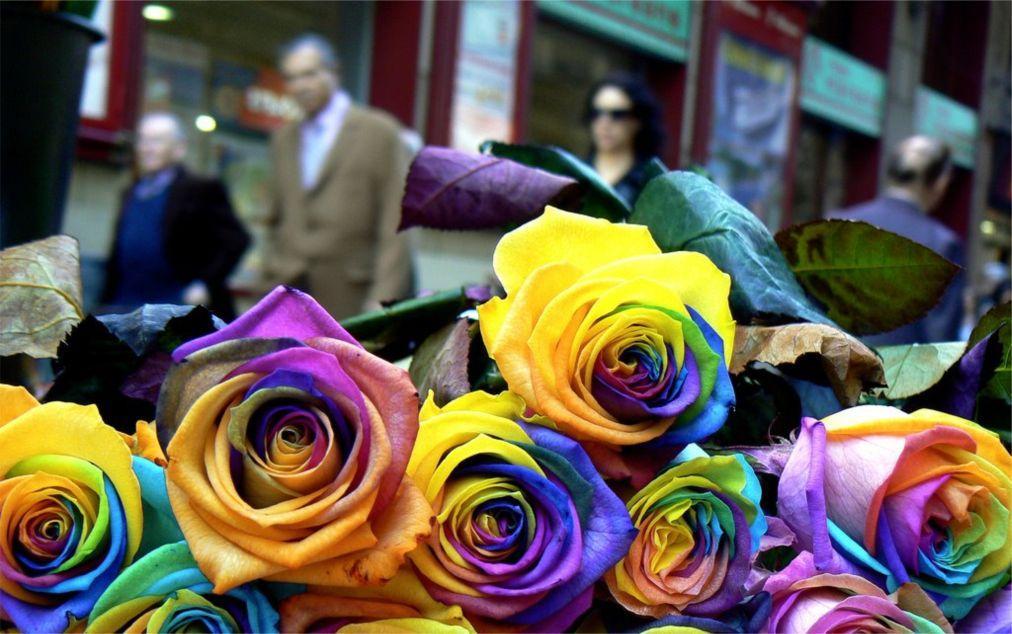 День Святого Георгия в Барселоне 1fb8ad8e70575a8d2c8d9092224986e2.jpg