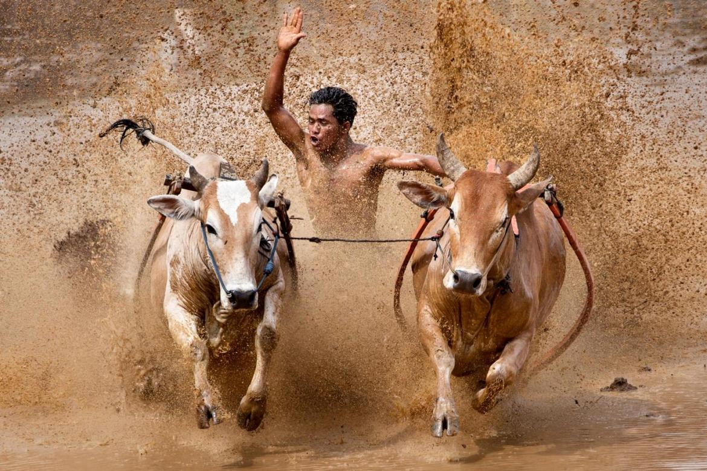 Праздник жатвы риса на Бали 27364c72ddaceb4670f1c9217f37eeed.jpg