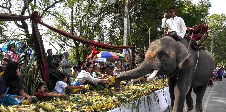 Фестиваль слонов в Сурине 359d1c2821862f1d7343c9f96d5d6b7a.jpg