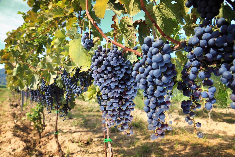 Винный фестиваль «Vino al Vino» в Панцано 36ba294d88a2ec3f25361a1402ecb75b.jpg