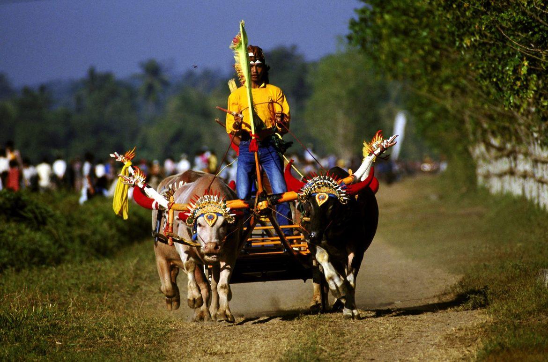 Гонки буйволов в Чонбури 41cc3b01703d8970c16fb260f2495d94.jpg