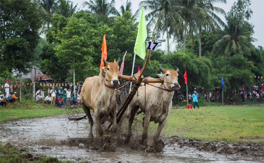Фестиваль буйволиных скачек в Анзянге 5c94aeecf5a09a46851d9f335cf415ed.jpg