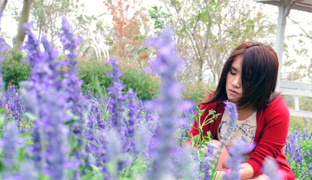 Фестиваль цветов «Флора Парк» в Кхао Пхаенг Ма 5d4e0f93448ffeb67f6e3a05377fd4ff.jpg