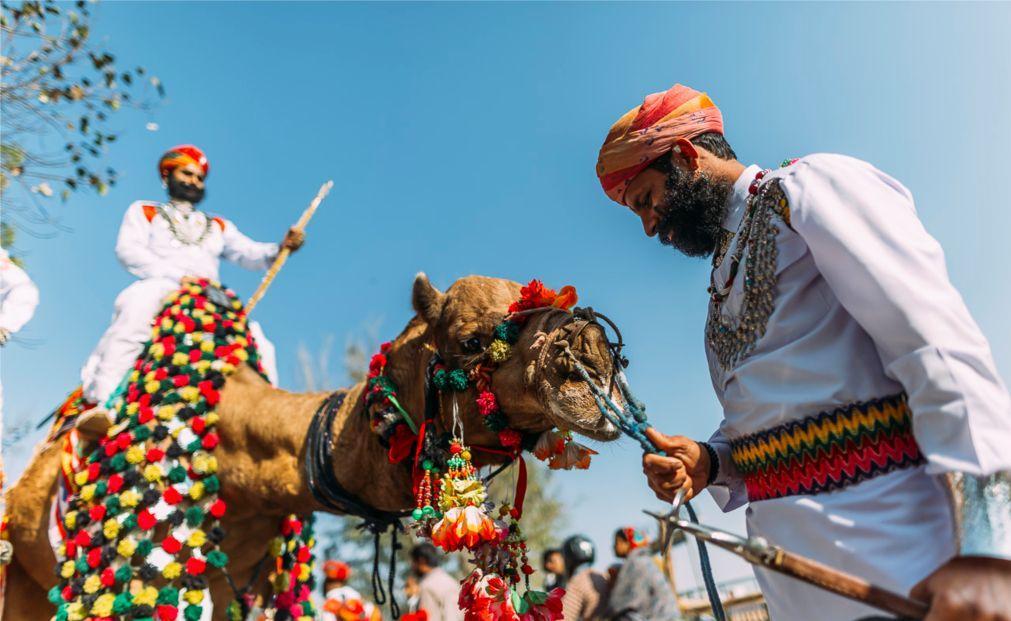 Биканерский фестиваль верблюдов 6fb4dff3d1d3f4ec84aeaa183110f090.jpg