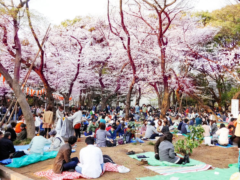Фестиваль цветения сакуры в Токио 754df6c438146f5e78680101b86bb0c3.jpg