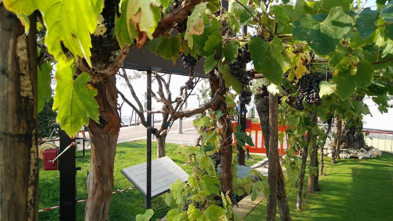 Фестиваль вина и винограда в Бардолино 79a7abe6309dc979e048230c4e1ee457.jpg