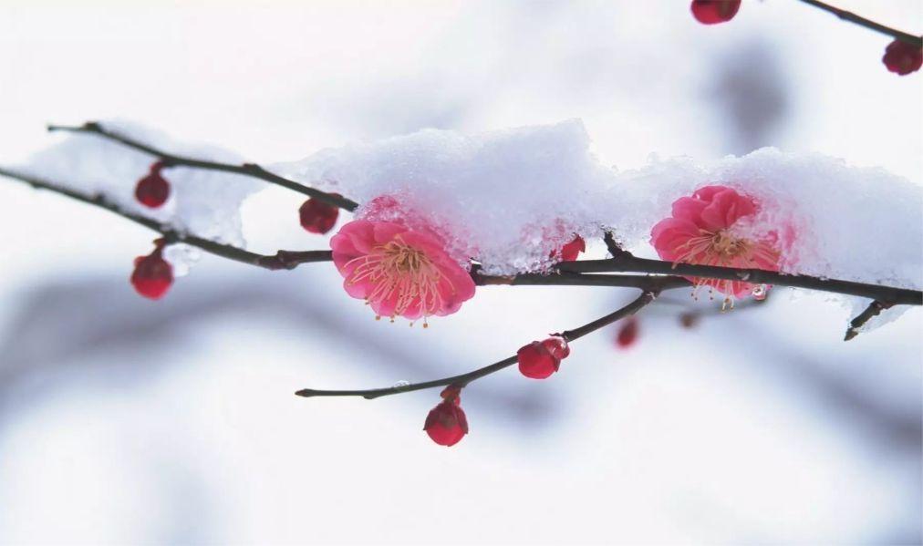 Праздник зимнего солнцестояния Дунчжи в Китае 845b2634bc9aab34d29418ae01b6e4e5.jpg