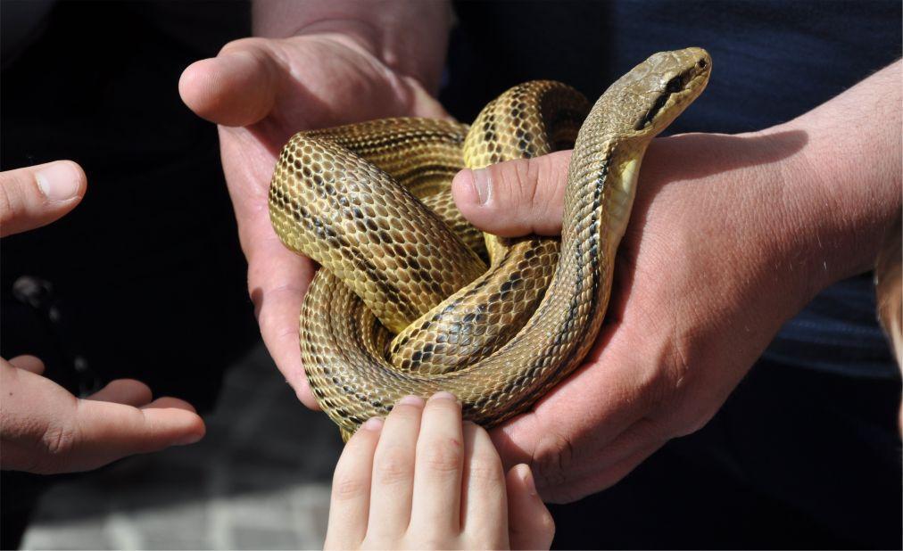 Фестиваль змей в Кокулло 8af175c70d3faeb375e1826bb5107451.jpg