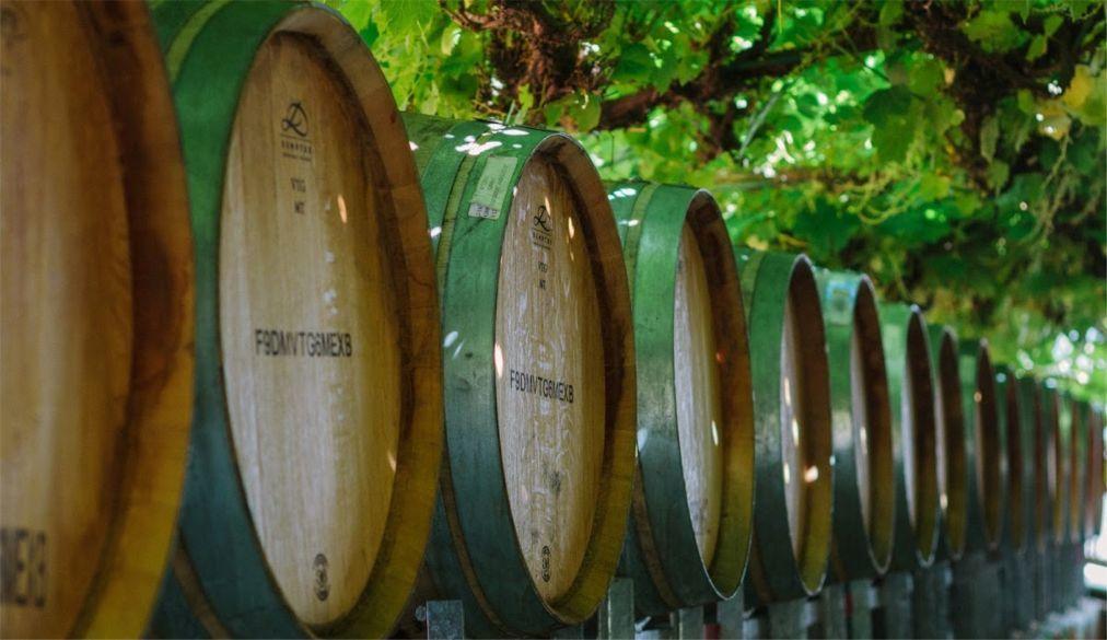 Фестиваль вина в Рюдесхайм-на-Рейне 8cc61ddee2534c767a0138703b68ef01.jpg