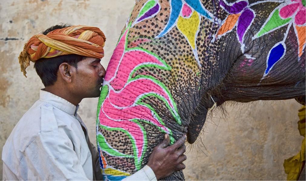Фестиваль слонов в Джайпуре 93a346c526a08556ea356373eb8e9572.jpg