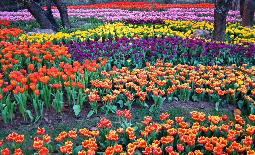 Фестиваль цветов в Чианграй 9713956a387764e9f9aef67f56ac6364.jpg