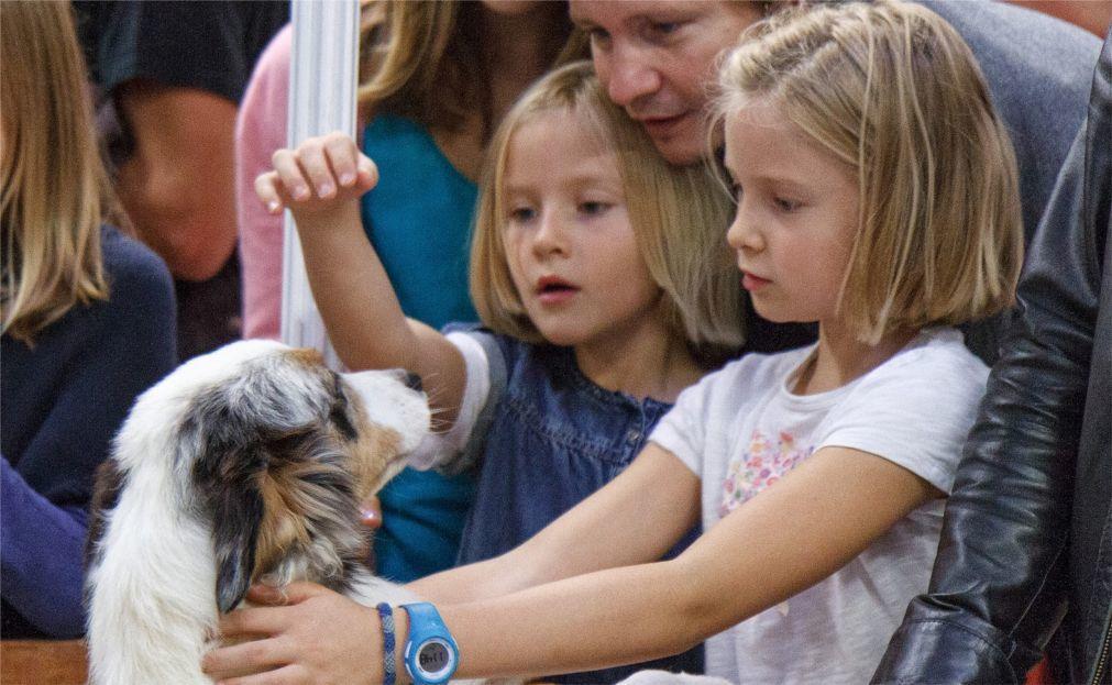 Международная выставка домашних животных в Париже 98375093c1d6d6efbe2f40c10393465a.jpg