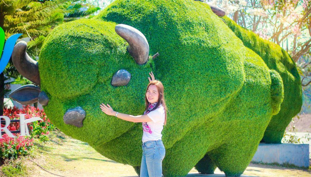 Фестиваль цветов «Флора Парк» в Кхао Пхаенг Ма a157e0cd041ba109aabb5212ba117221.jpg