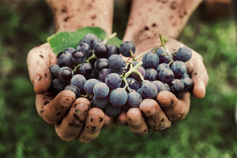 Фестиваль винограда в Угрюпе a57acb1a3d8687e7f8f2ebef949e8875.jpg