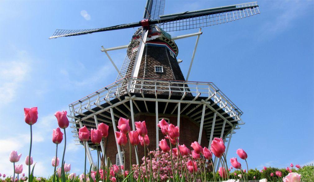 День мельника в Нидерландах b9864c6565b2a869714407fc6cb1c553.jpg