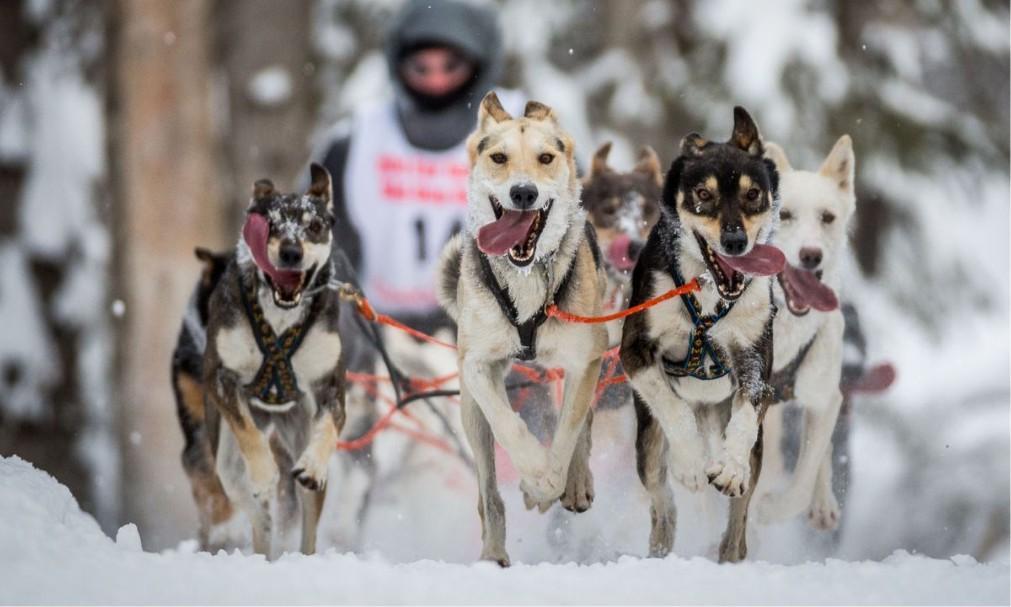 Зимний фестиваль Fur Rendezvous в Анкоридже bc567c8d11de1582107d5c17f853bc2a.jpg
