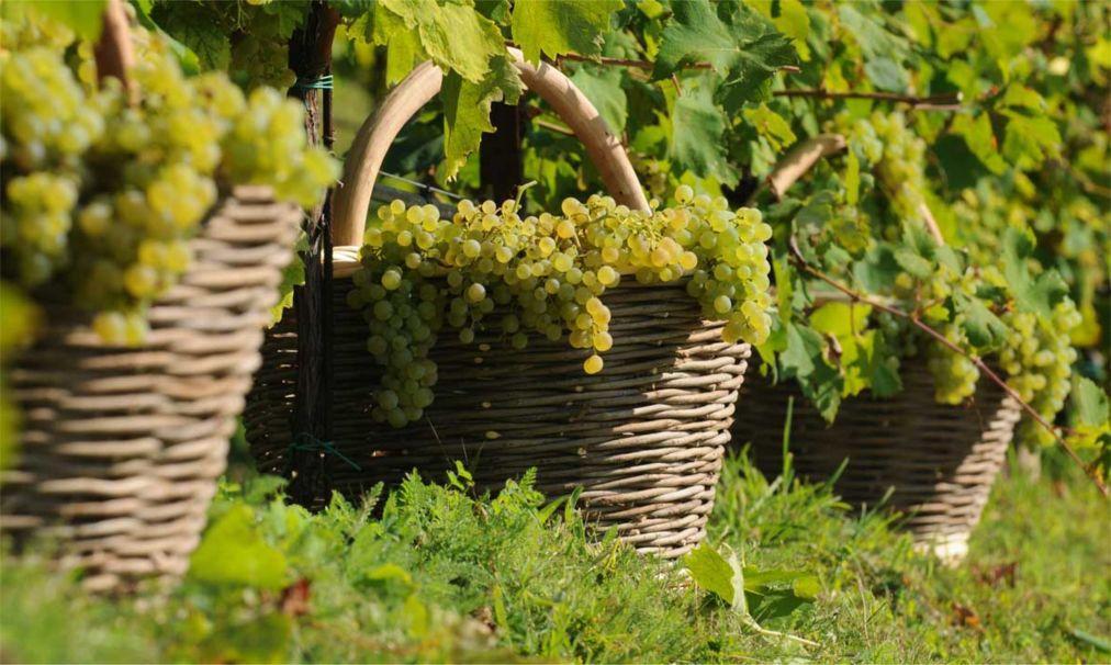 Фестиваль вина Просекко в Тревизо be245bd5e42547abfd13c575dfc3fbda.jpg
