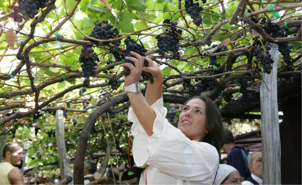 Фестиваль вина на Мадейре bfa1ad6304c434e900b48597e365463b.jpg