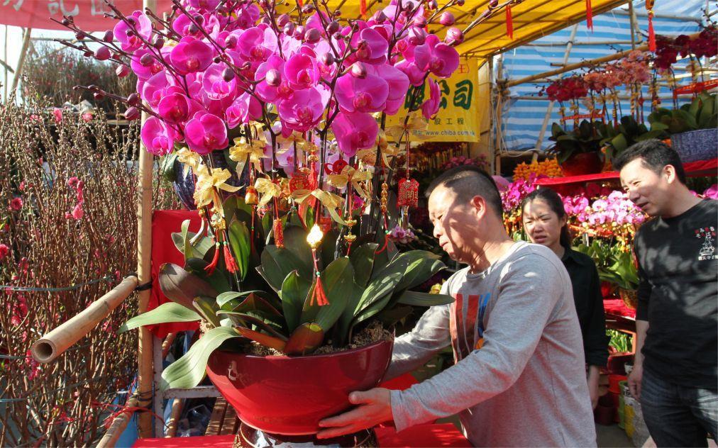 Цветочная ярмарка Фестиваля весны в Гуанчжоу c377dcf46c32c02c796a0d699b65af62.jpg