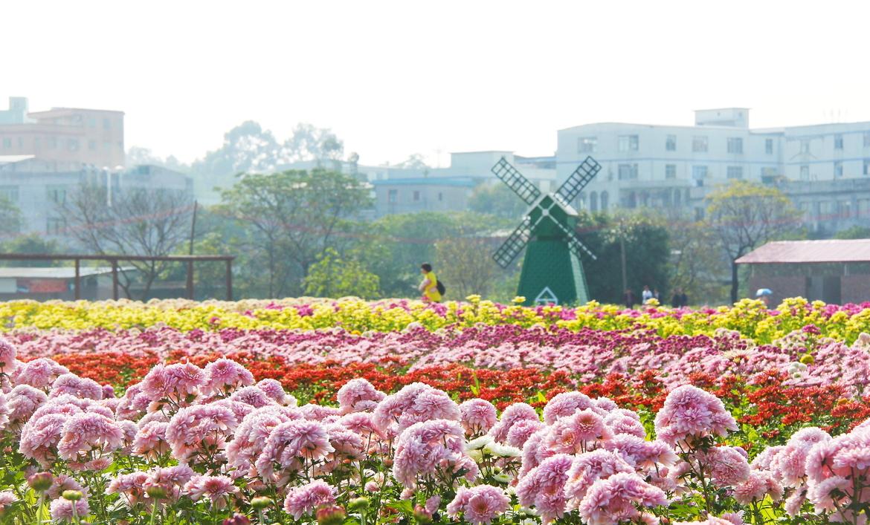Цветочная ярмарка Фестиваля весны в Гуанчжоу e0e69fdb6ea0bec5c09dc626558e032a.jpg