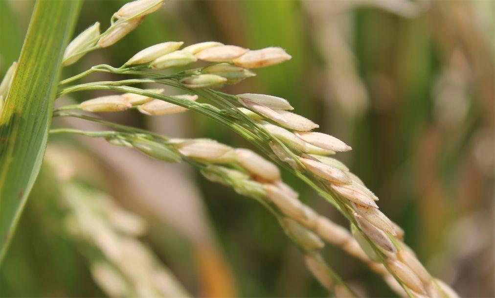 Праздник жатвы риса на Бали ee6eeca53155614467960df55de95f3f.jpg