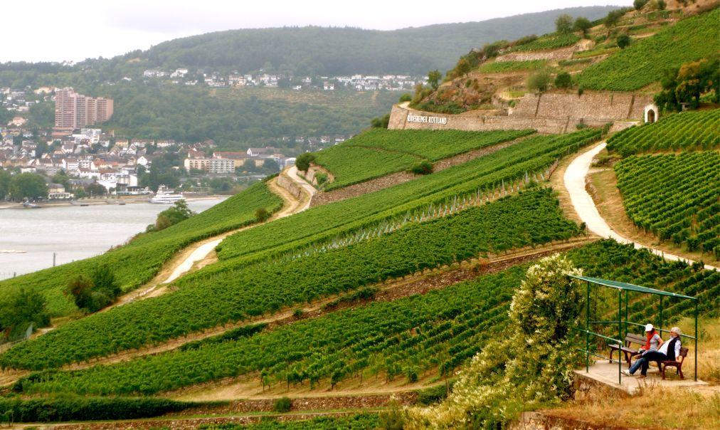 Фестиваль вина в Рюдесхайм-на-Рейне f026cd325864d7e120a9278a0eb06290.jpg