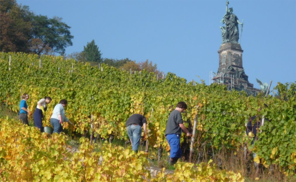 Фестиваль вина в Рюдесхайм-на-Рейне f354d483f546eaea85ed2abba11785fc.jpg